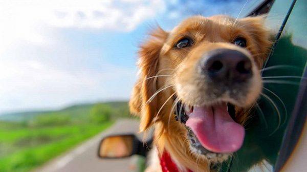 Die Reise-Checkliste für den Hundeurlaub